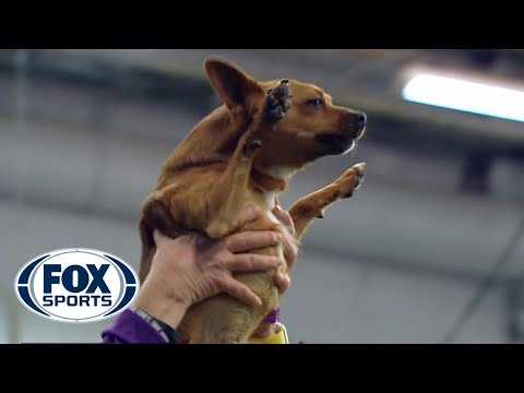 Best of the 2018 Masters Agility Championships WESTMINSTER DOG SHOW 2018 FOX SPORTS