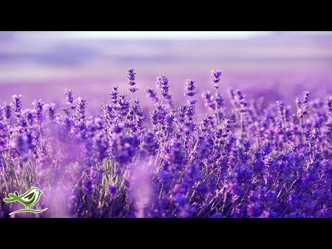 Relaxing Harp Music Sleep Music Stress Relief Meditation Music Spa Music Background Music ★53