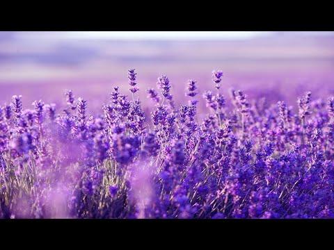Xxx Mp4 Relaxing Harp Music Sleep Music Stress Relief Meditation Music Spa Music Background Music ★53 3gp Sex