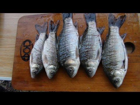 все о рыбалке на карася на кубани
