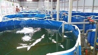 ঘরের ভেতর মাছ চাষ | Indor Fish Farming RAS