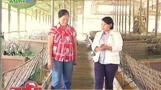 Techniques tungo sa modern itik farming