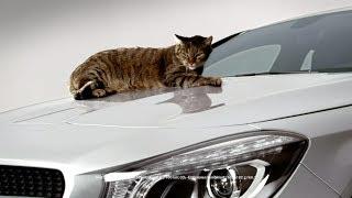 funny Mercedes-Benz CLA commercial - Cat