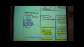 ANATOMY; ENDOCRINE SYSTEM by Professor Fink