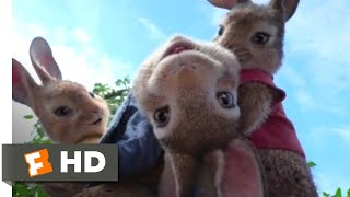 Peter Rabbit (2018) - House Party Scene (2/10) | Movieclips