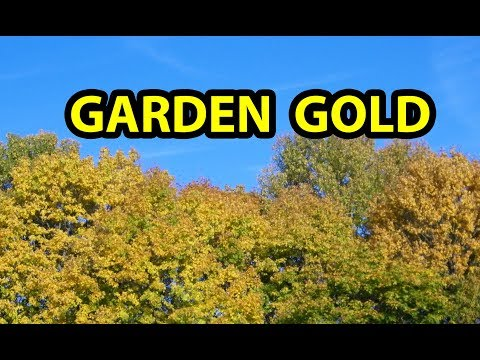 COMPOST with Only Fall Leaves in Garden ( aka, leaf mold ) building healthy organic garden soil