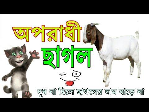 Xxx Mp4 অপরাধী ছাগল Oporadhi Sagol Bangla Funny Song 2018 BY Only Binodon 3gp Sex