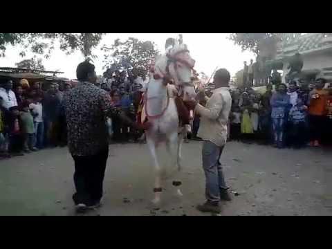Xxx Mp4 Hasanpura IDAR Gujrat MAHI GODI BHAI BHAI DANCE IMAMBHAI MO 9427982869 3gp Sex