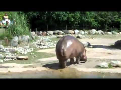 Xxx Mp4 Hippo Shitting Everywhere 3gp Sex