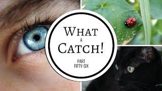 What a Catch! Part 56 (A Miraculous Ladybug Fanfiction)