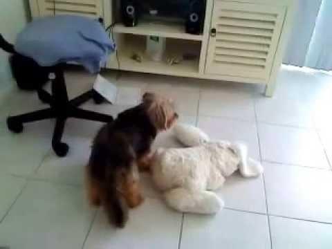 Xxx Mp4 Cutest Dog Having Sex 3gp Sex