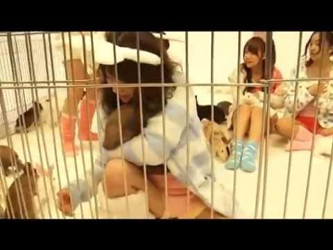 AKB48 うさぎと撮� � ゆきりん泣く