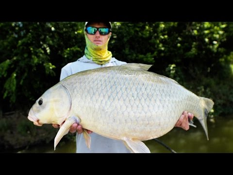 GIANT RIVER BUFFALO FISH! | Fishing Frogs for Bass Under Trees