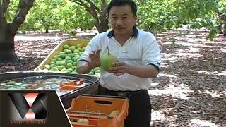 Ký Sự: Người Việt Ở Úc Châu [Vân Sơn 28 - Vân Sơn In Melbourne]