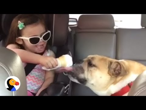 Bulldog and Girl Are CUTEST Best Friends For Life | The Dodo