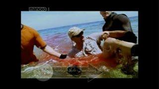 مستند حمله کوسه به انسان