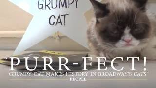 Grumpy Cat Joins CATS on Broadway!