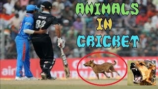 Top 10 Funny Moments with Animals In Cricket Match
