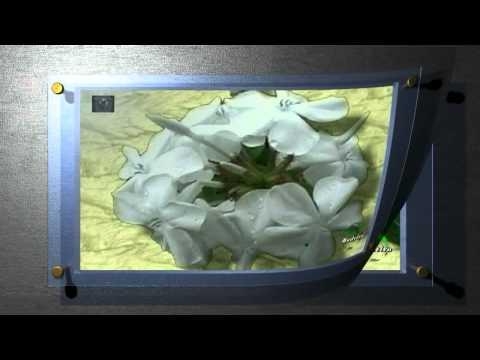 Madeira  Blüten auf Pergament