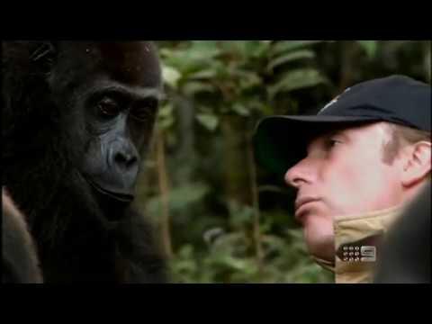 Xxx Mp4 Human And Gorilla Reunite After 5 Years 60 Minutes Australia June 3rd 2012 3gp Sex
