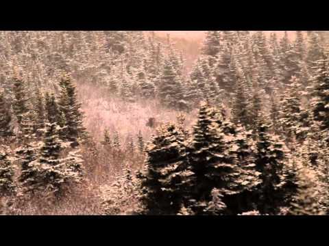 Sitka Films: BC Moose
