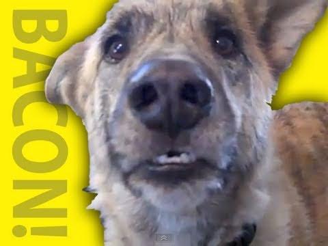 Xxx Mp4 Ultimate Dog Tease 3gp Sex