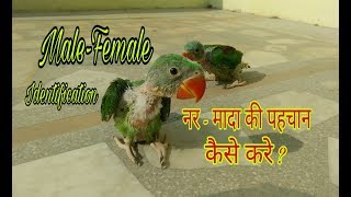 Baby Parrot Male Or Female Identification In Hindi/Urdu