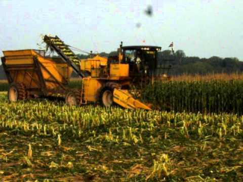 Sweet Corn Harvest 2010