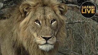 safariLIVE - Sunrise Safari - November 3, 2018