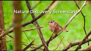 Episode 14 - Nature Discovery Screencast - The Struggle