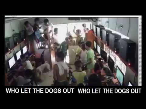 Who let the dogs out in cyber cafe in vietnam