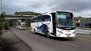 Bis Sinar Jaya, DMI, Teguh Muda, dan Bus Larasati