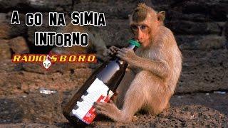 A Go Na Simia Intorno - RadioSboro