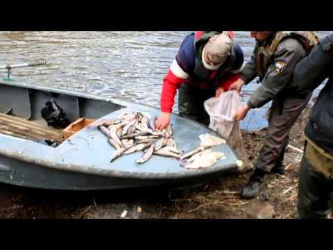 Катера сибири рыбалка на енисеи