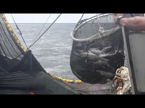 Barco Atunero. Pesca Industrial.