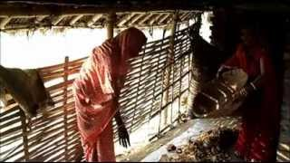 Making of Vermicompost (Without Pit) Hindi Jeevika Bihar