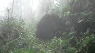 Ruhengeri National Park, Rwanda