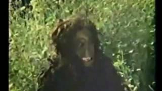 Shook Maar - Cinéma Pachtoune
