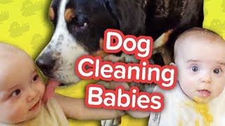 Dogs Cleaning Babies & Dramatic Ponies!! // Funny Animal Compilation