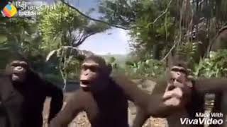 Ese lehra k vo  rubaru aa gyi.  || Gorilla funny dance ||