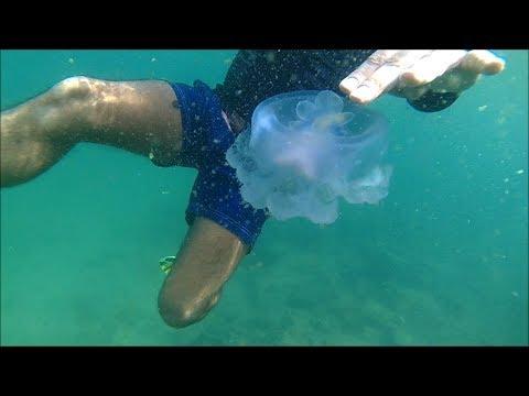 Snorkeling at Muscat -Oman