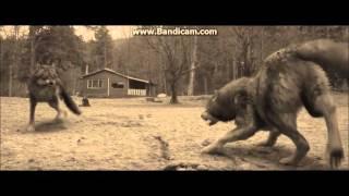 Twilight Wolves - Shatter me(Lindsey Stirling ft Lzzy Hale)