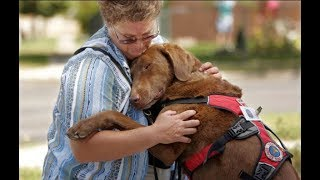 Awesome! The lovely feelings of dogs Videos 2017