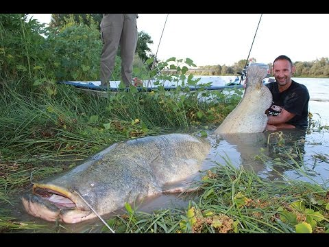 CATFISH MONSTER VS SMALL SPINNING ROD 260 POUNDS X 2 53 METERS by YURI GRISENDI