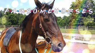 Fabsome Horses Episode 8:  A quick trip to LA   Learning a Brand New Bridle