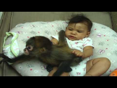 baby jeannelyn playing with baby monkey.