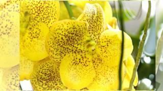Čudovite orhideje v Cvetličarni Aralija HD