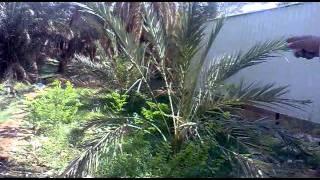 malik family part 1.mp4
