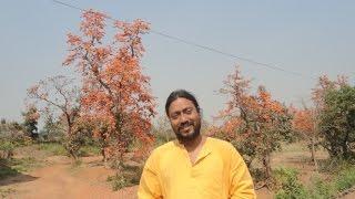 Lakhandas Baul - NODI BHORA DHEU