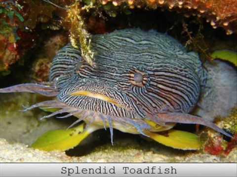 Strange Fish Part 1